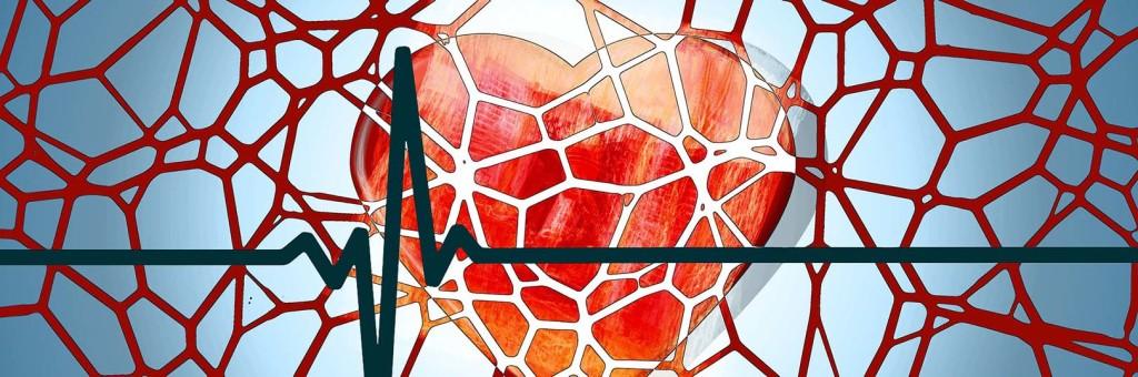 Blutgefäße - Blutkreislauf | alpha Lernen erklärt Biologie ...