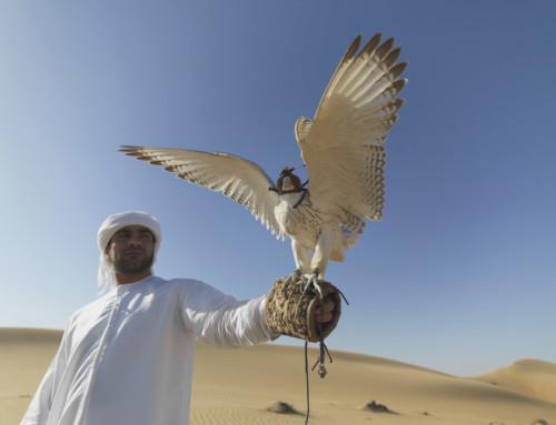 Kamelrennen, Falkenzucht & Co. – Die teuren Hobbies der Araber